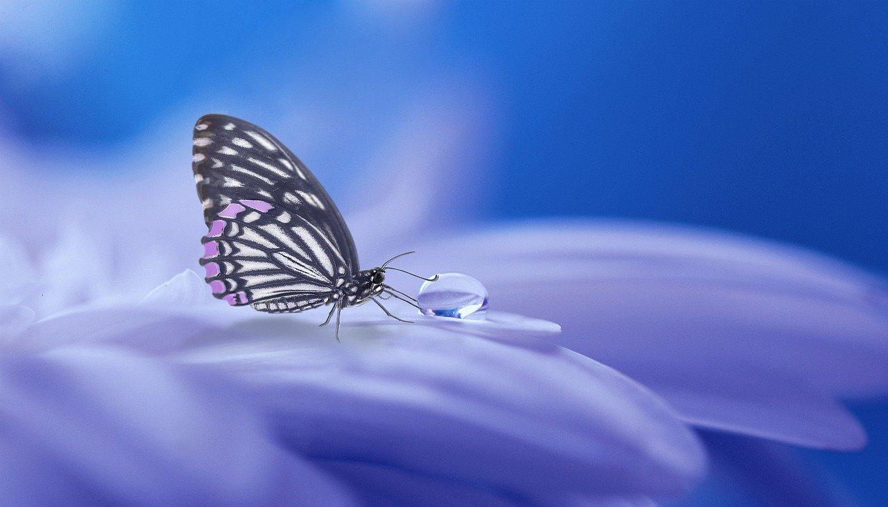 butterfly-3054736_1280